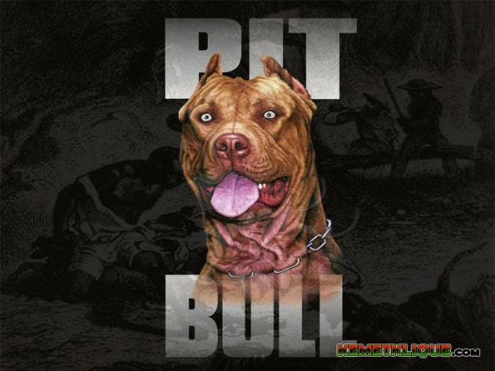 American Pit Bull - History in Slavery